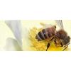 Пчеловодческая Компания «Тенториум»